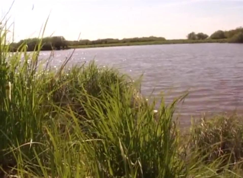 В бассейне реки Амур сегодня активно ведется добыча сезонного лосося