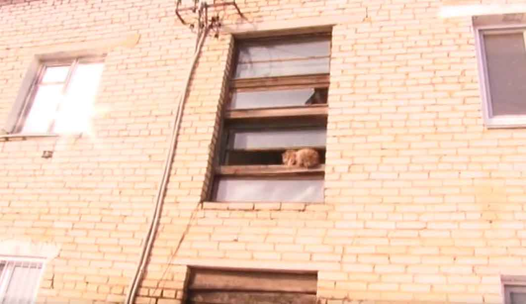 Прокурорская проверка дома №6 по ул Урминской с Песчаного
